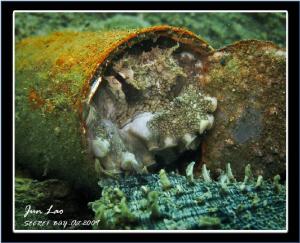 Crab Killer! Watch-> http://www.youtube.com/watch?v=H9rNj... by Jun Lao
