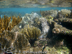 Snorkeling in Xpuha by Philippe Duval