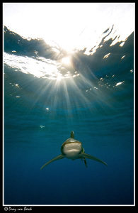 Oceanic in ther sunshine by Dray Van Beeck
