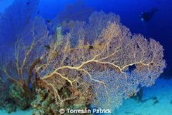 Gorgonia by Torresan Patrick