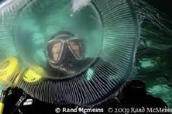 This moon jelly was about the size of a dinner plate. I j... by Rand Mcmeins