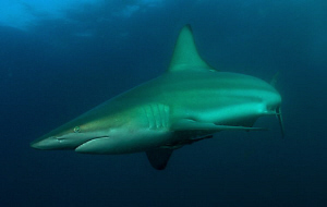 Black tip by Charles Wright