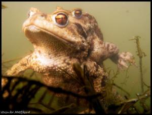 Frogs by Veronika Matějková