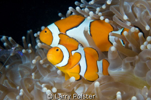"""""""Bring in the Clowns"""" ... This pair waiting for cleaner s... by Larry Polster"""