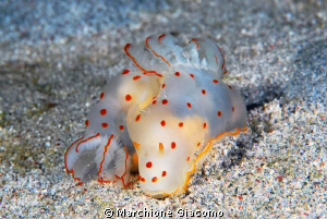Nudi with pois red 