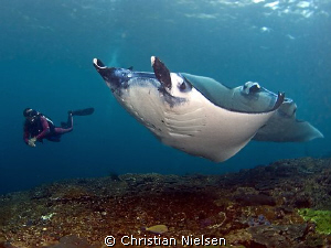 What a day :-) My guide Wayan with 2 beautiful Manta Ray... by Christian Nielsen