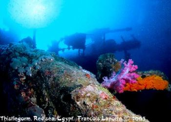This picture was taken in the Red sea. The wreck is the T... by Francois Laporte
