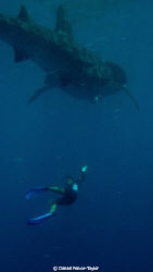Whale shark encounter...no need for words! by Daniel Ponce-Taylor
