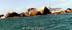 Seal Rock, Geraldton ;) by Chloe Taylor