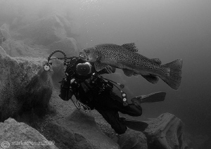 Dirk & brown trout. D3 15mm. by Mark Thomas
