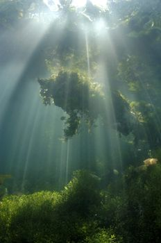 Early Morning in Kakaban Jellyfish lake gave this beautif... by Roger Munns