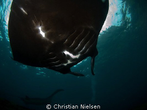Sunblock These animals are big and always a great experi... by Christian Nielsen