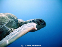 slowly swimming side by side with a turtle in Sipadan. Ta... by Davide Vimercati