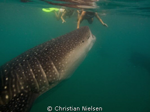 Don't worry, I am a vegetarian ;-)