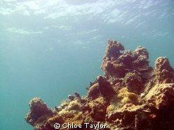 Abrolhos Islands ;) by Chloe Taylor