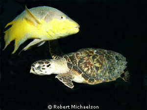 I was taking several pictures of the turtle when this Spa... by Robert Michaelson