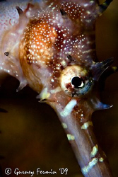 This is a shy sea horse that was trying hard not to be no... by Gurney Fermin