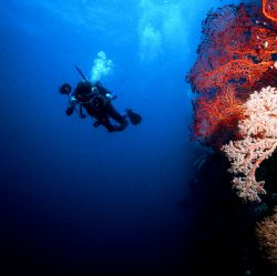 Ngmelis Wall, Palau, Eastern Caroline Islands.  Housed Ni... by Rick Tegeler