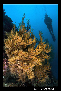 A little bit of scenery.. Nikon D200 with Sigma 15mm fish... by Andre Yanco