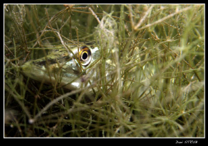 Young Pike in the seegrass, 70mm, f6.3, 1/80 by Daniel Strub
