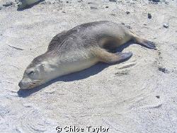 Abrolhos Islands ;) by Chloe Taylor