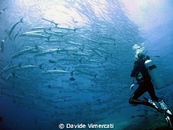 """wonder why they call it """"barracuda point""""?!? taken with ... by Davide Vimercati"""