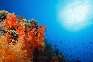 An underwater playground ... Taken with Canon XSi and Tok... by Vladimir Levantovsky
