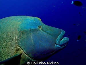 Look at me.