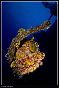 Frogfish on the Salem Express at sunset. by Dray Van Beeck