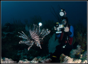 The Lion Invader, and a diver filming it. by Juan Torres