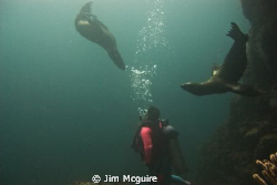 This was the Sea of Cortez and the pups were very curious... by Jim Mcguire