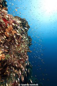 Coral and fish at Jackson Reef Tiran. by Stephan Kerkhofs
