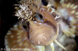 Decorated Warbonnet. Port Hardy Canada. Finally able to g... by Rand Mcmeins