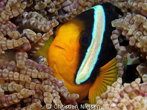 Home sweet home.
