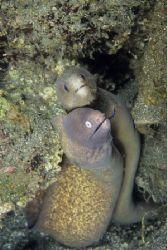 Moray eels photographed in Manado, Indonesia. Nikon F90X,... by Pablo Pianta