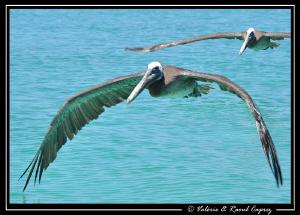 Picture taken in the Cortez Sea. by Raoul Caprez