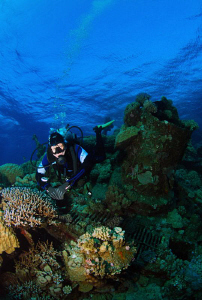Diver at a wreck in red sea by Andy Kutsch