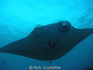 We were underwater at about 45ft. at a cleaning station w... by Rick Ouellette