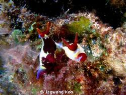 Mating of Nudibranch by Jagwang Koo