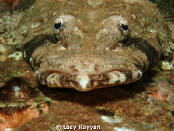 Crocodile Fish by Loay Rayyan