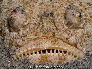I am ugly ;-)