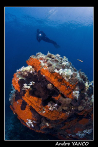 The baby reef... Shot off the coast of Kabatepe.  Nikon D... by Andre Yanco