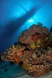 Apo Island coral head with a traditional Philippino Banca... by Steve De Neef