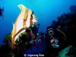 Bat Fish & Diver by Jagwang Koo