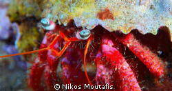 the eyes of a small hermit crab by Nikos Moutafis