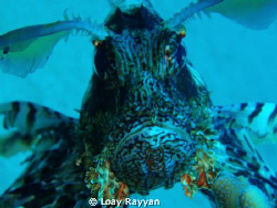 Lion Fish by Loay Rayyan