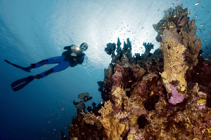 """El Quadim Reef""  In El Quseir, Egypt. by Henry Jager"