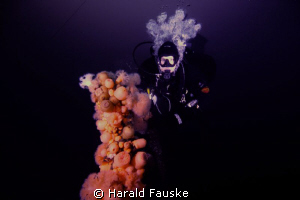 Lucky shot of rhe rare norwegian frogfish, living on a be... by Harald Fauske