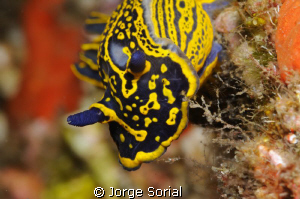 Seaslug