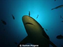 A bullshark swiming by... by Ramon Magana